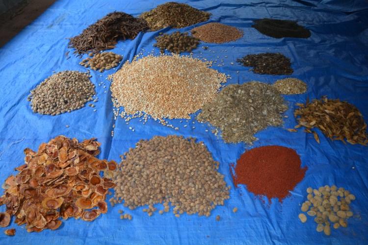 Sementes antes de serem misturadas para formar a muvuca, na sede da Serracima